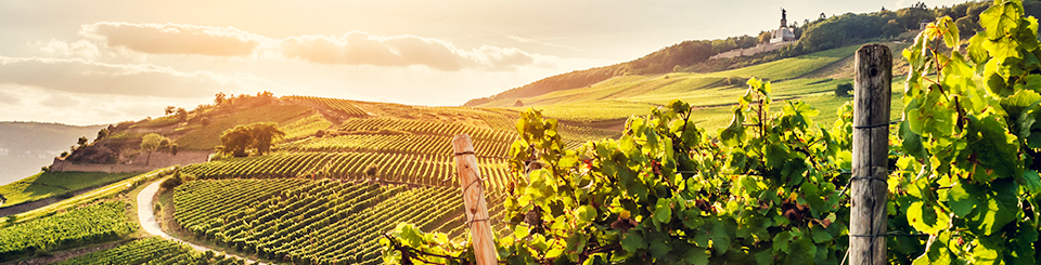 Hotels for Wine Lovers
